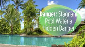Danger Stagnant Pool Water a Hidden Danger