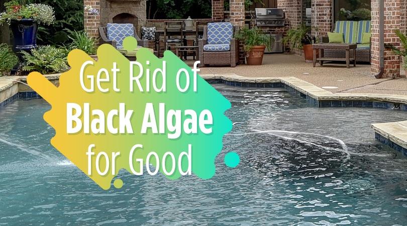 Get Rid of Black Algae for Good